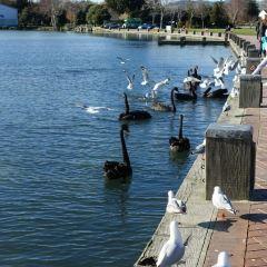 Lake Rotorua User Photo
