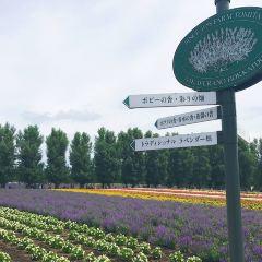 Farm Tomita Lavender East User Photo