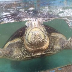 Funny Sea World User Photo