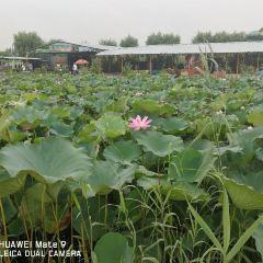 Burning Liao-Soldier Dian (Baiyangdian wetland) User Photo