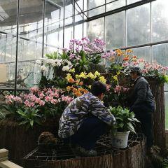 Wuhan Botanical Garden User Photo