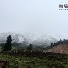 Qilian Mountain Grassland User Photo