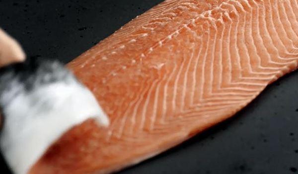 Fisch Franke2