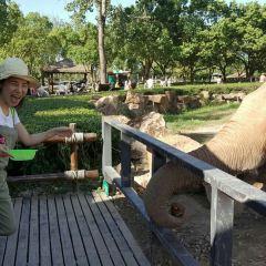 Twin Camp Chang Elephant User Photo