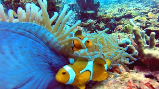 Sapi Scuba Diving