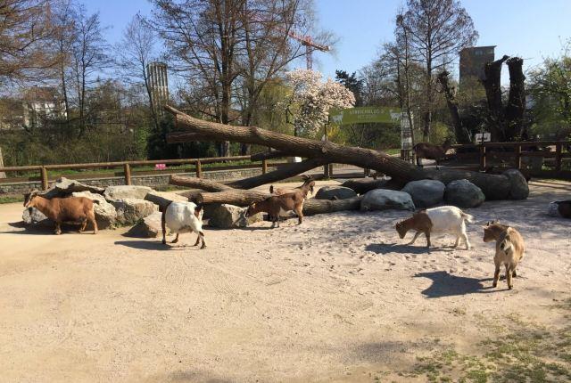 法蘭克福動物園