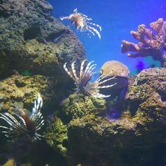Linyi Ocean World Theme Park User Photo