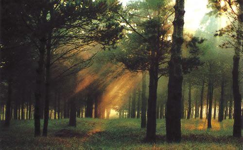 章古台沙地森林公園