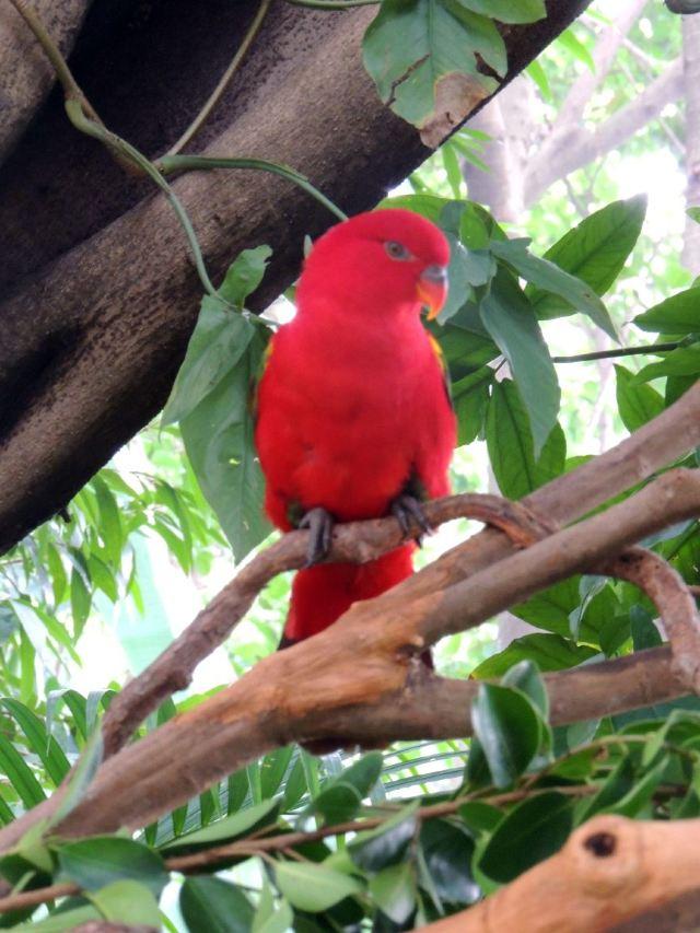 Chimelong Bird Park