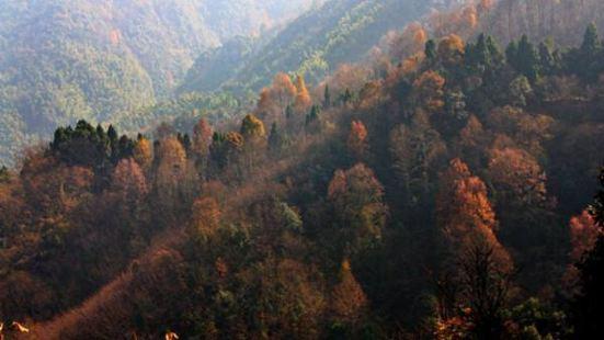 崇陽桂花森林公園