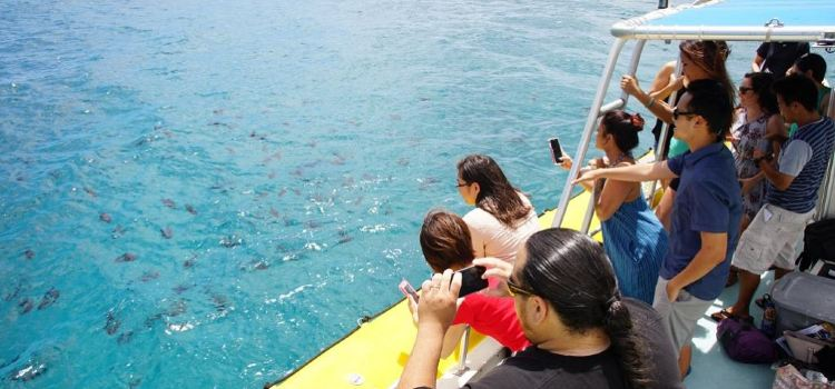 Waikiki Beach Speedboat experience