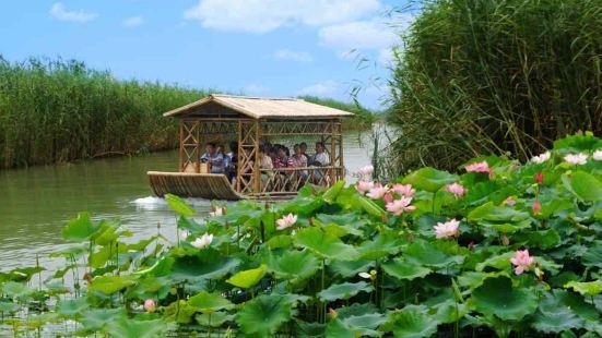 洪澤湖濕地觀鳥園