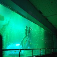칭다오 해저세계 여행 사진