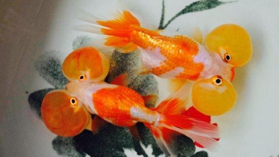 Red House Aquarium