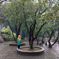 Qingyun Temple User Photo