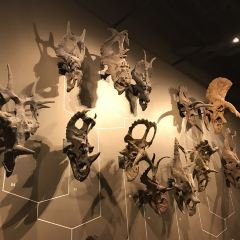 Natural History Museum of Utah User Photo