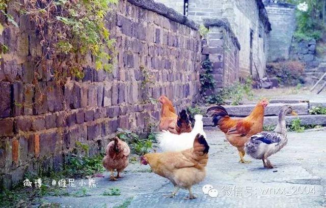 【湖南·郴州】迴繞在脣舌間那些鄉村美味