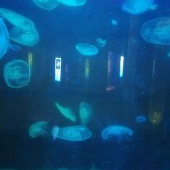 바다의 언어 씨월드 여행 사진