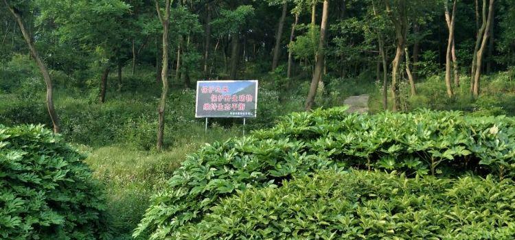 구룡산 국가삼림공원