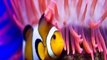珊瑚礁海洋生态馆