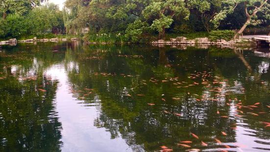 花港觀魚孔雀園
