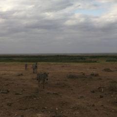 Samburu National Reserve User Photo