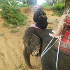 Phuchada Safari User Photo