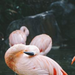 Los Angeles Zoo and Botanical Gardens User Photo