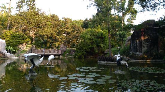 Zhainei Ancient Banian Park