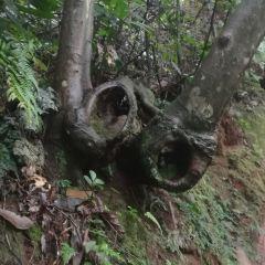 Chishui Danxia Tourist Area -- Swallow Rock User Photo