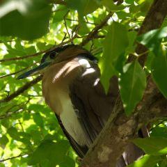 Olango Island Wildlife Sanctuary User Photo