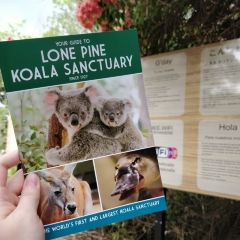 Lone Pine Koala Sanctuary User Photo