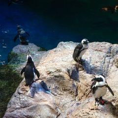 New England Aquarium User Photo