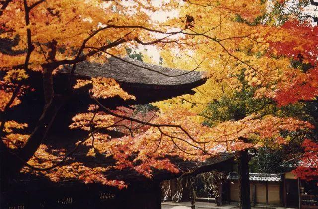 京都+名古屋+福岡,大眾旅行地的小眾賞紅葉指南