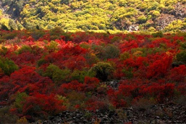 九寨溝僅佔1%的美,阿壩州13縣,處處是天堂!