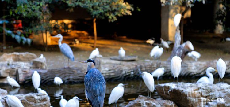 Jinan Zoo2