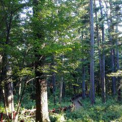 紅松林森林公園用戶圖片