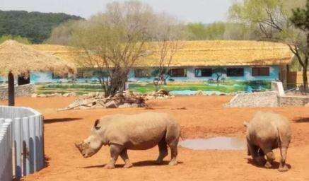 Shenyang Forest Wild Animal Zoo