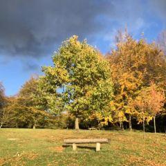 皇家維多利亞公園用戶圖片