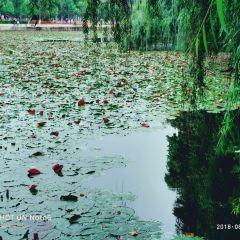 Enjoying Flowers in Cuihu Park User Photo
