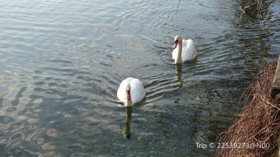 Swan Lake Hotel