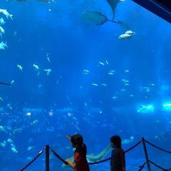 S.E.A.海洋館用戶圖片