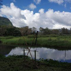 와이피오 계곡 여행 사진