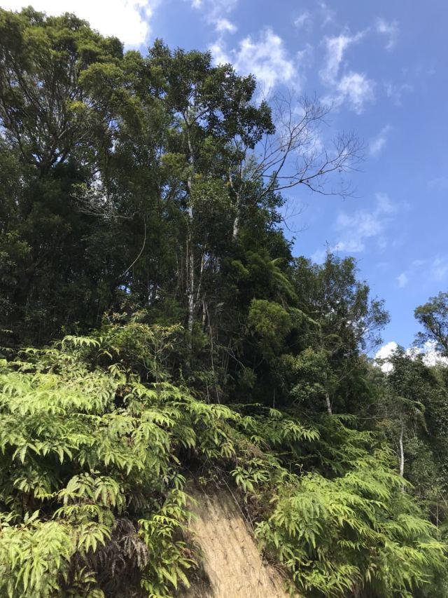 吊羅山國家森林公園