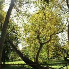 Parco Sempione User Photo