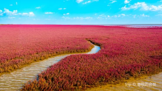 遼河口紅海灘