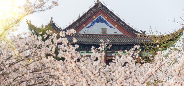 武漢大學3