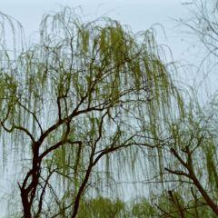 汨羅市國家濕地公園用戶圖片