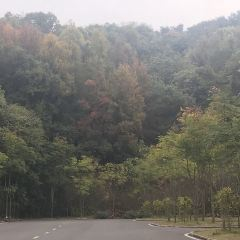 團城山公園用戶圖片