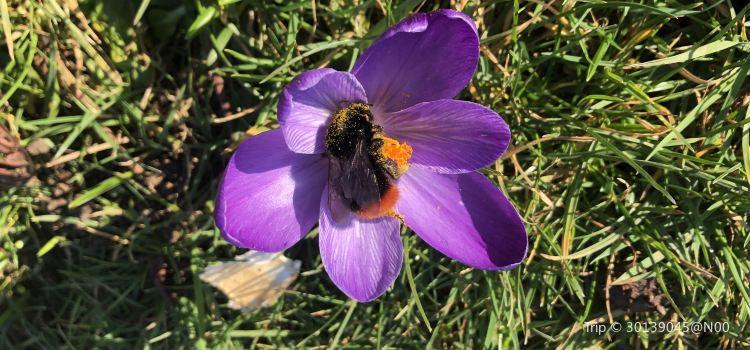 꿀벌농장3